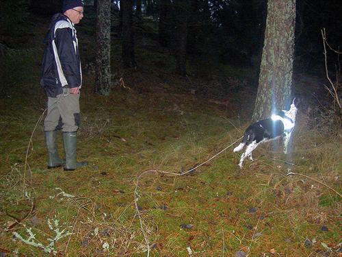 Det är lätt att komma av sig när man är nybörjare en hund skällde måste kolla vart den är.