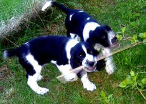 Ville-Winston och Lea bär pinne tillsammans