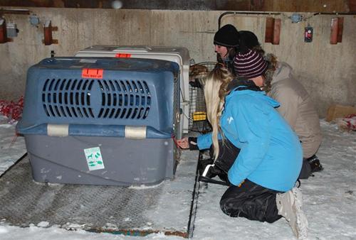 Arlandahämtning20100219 002rooneyrudy