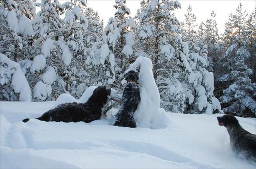 Vinter sök Valle Skrållan Bella