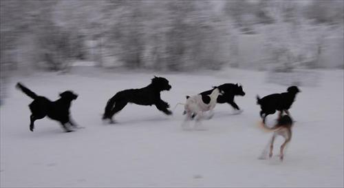 våra hundar 2010-01-14 058bollekar