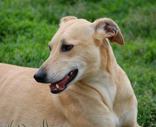våra hundar sally skrållan 2010-06-20 066sally