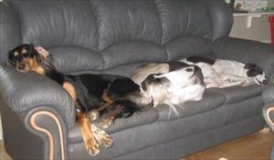 Mys i soffan
