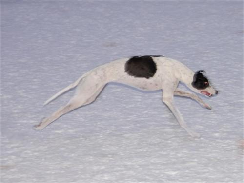 våra hundar 2010-01-14 067nikki