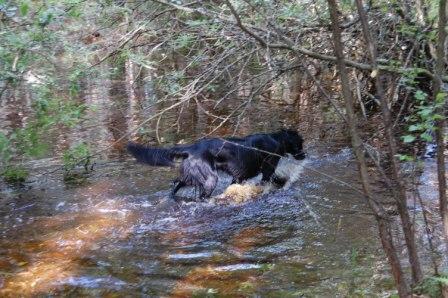 Greta i pölen i skogen