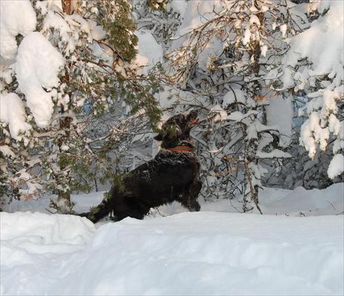 Januari2010-01-30 054skrollan