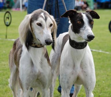 Lucky och Nikki juli 2009