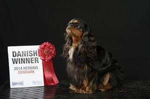 33. Viky Dansk vinnare 2014