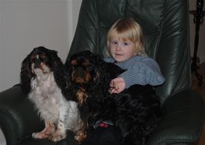 Ett litet knä fullt med hundar...