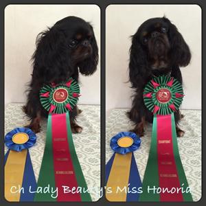 Lady Beauty´s Miss Honoria