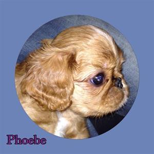 Phobe