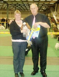 Hund 2009