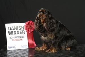 34 .Lucky Dansk vinnare 2014