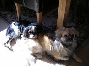 Dennis & Staffan, två verkliga kompisar myser i solen.