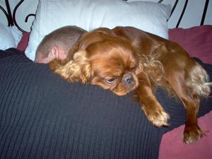 Snark..här sover Amy gott på husses rygg.
