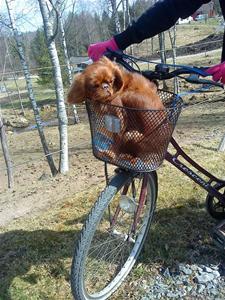 Amy på cykeltur.
