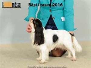 2016-12-04 Midas Svensk Vinnare
