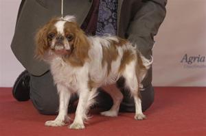 3. My dog Bir valp