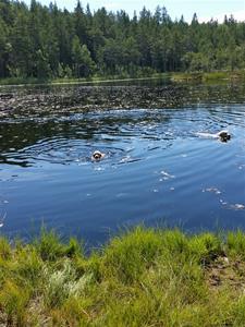 Fina simmar i Ögeltjärn 10 v.