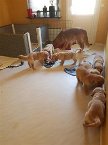 Sista gången alla sju är med på samma bild. Matte kom hem med roliga leksaker.