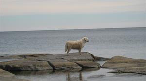Stella på klipporna .