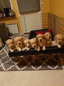 Alla sju på samma bild.