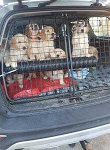 På väg till valpbesiktning hos veterinären.
