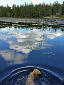 Fina simmar i Bergsjön 10 v .