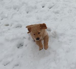Ute i snön för första gången.
