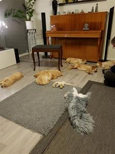 Skönt, ibland sover de.