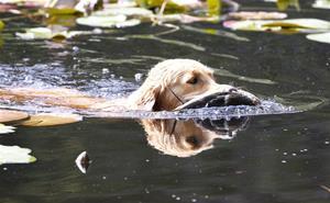Fina i vattnet.