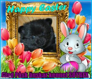 Happy Easter - 2Gbpu-10t - normal