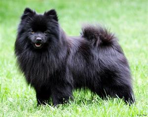 Dagsljus Beautiful Black Velvet