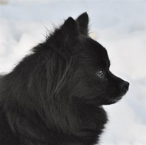Soya i profil  feb2014