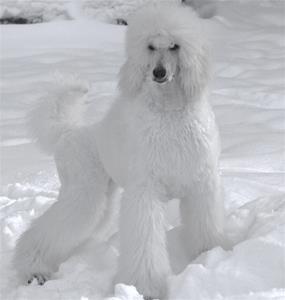 toya snö drottning