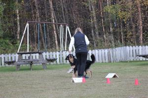Cecilia och Årca tränar rallylydnad.