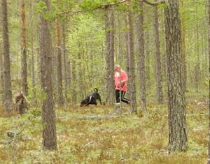 Annie o Nubbe i spårskogen.