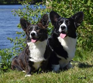 Doris och Challe Juli 2020