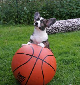 Tilde på bollen