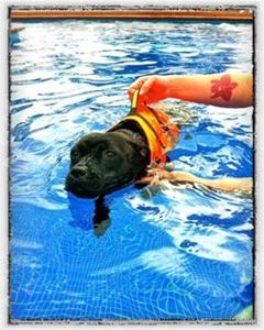 Carla simmar