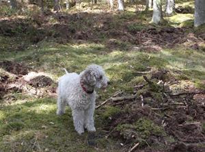 Rosa i skogen