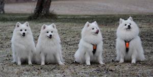 Tess, Tulo, Lux och Chippen