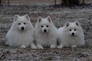 Pix, Jack och Tulo