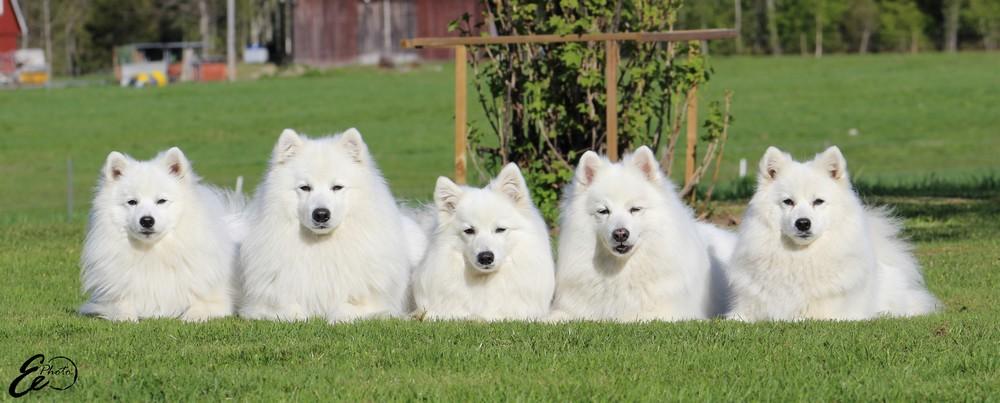 Tulo, Pix,Thea, Jack och Tess