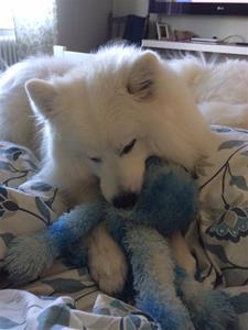 Mys pix när han ska sova med sin bläckfisk