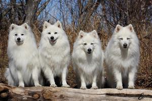 Tulo, Tess, Thea och Jack