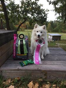 Tess hudiksvall 22 sep 2018 rallylydnad