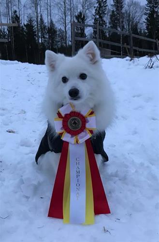 Thea svenska rallylydnads champion