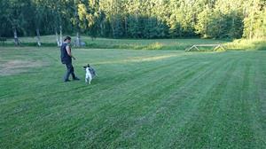 Amanda gråhund gräsplan fotoAnnGottvall