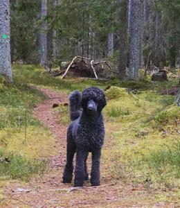 Otto i skogen